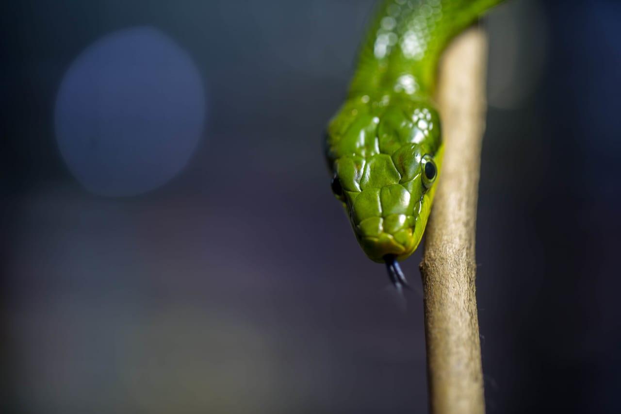 ヘビの画像